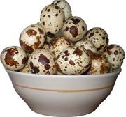 Продам перепелиный яйца