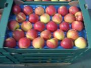 Яблоки и груши из Польши прямые поставки