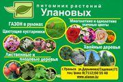 Услуги по озеленению продажа растений